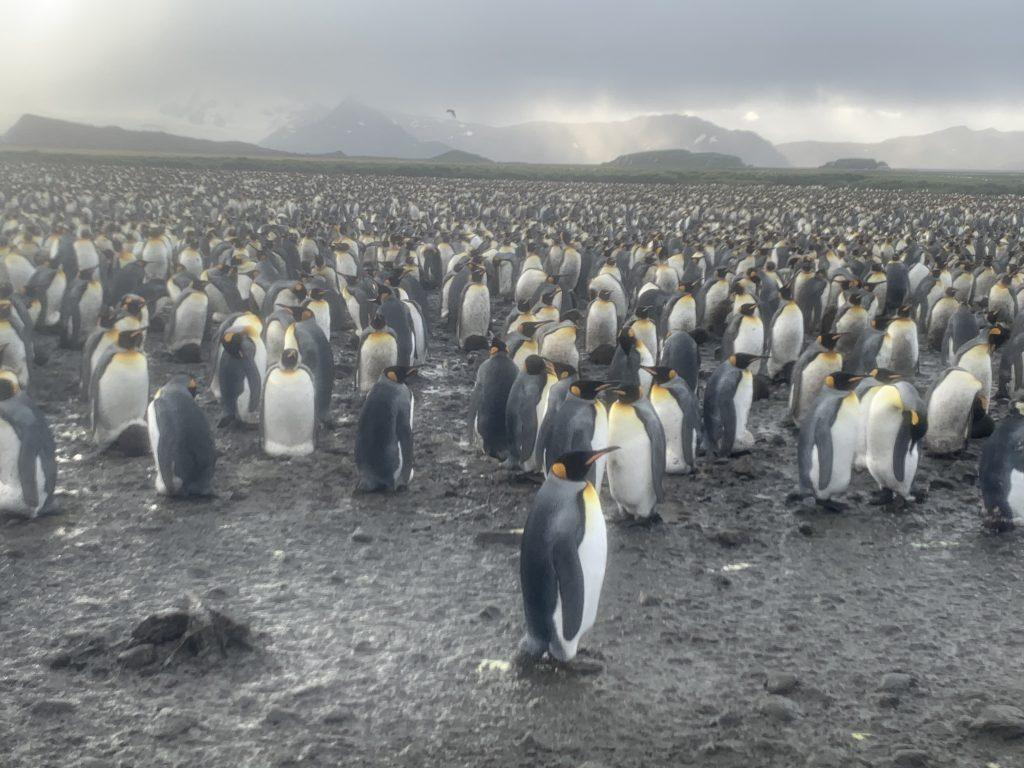 南極旅行は今行くべきか